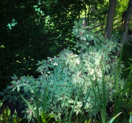 Trädgården är ganska ung men med massvis av buskar har den växt till sig snabbt.