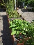 Maggans lådor är spännande. Här finns ge-bort-växter men också mängder av sticklingar.