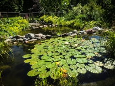 Vattnet renas naturligt i den övre dammen för att sedan rinna ner till de nyfikna fiskarna, som också kan gå in på en bit mycket grunt vatten.